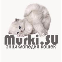 Мурки — Сайт про кошек, породы и уход.