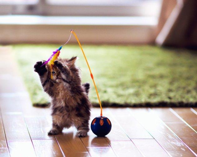 Зачем кошке игрушка