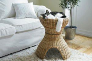 Польза от кота
