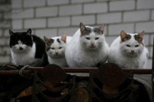 О чем «болтают» кошки