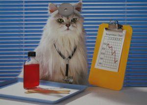 Кошка в - лекарь доме