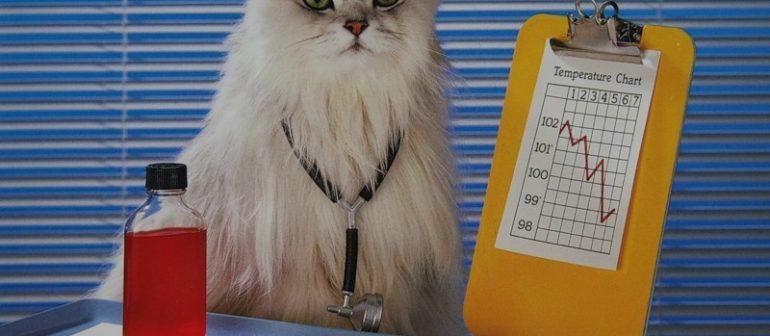 Кошка — лекарь в доме