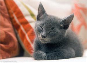 Психология кошек и особенности её поведения