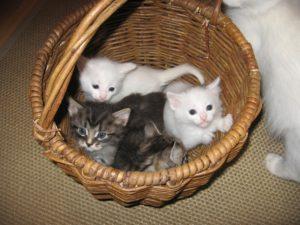 Котенок выбирает хозяина