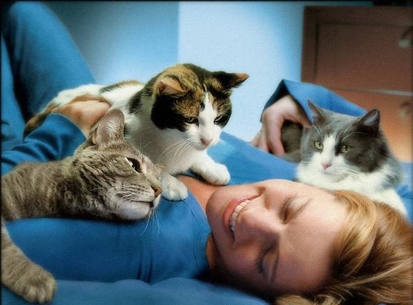 Кошки — лекари