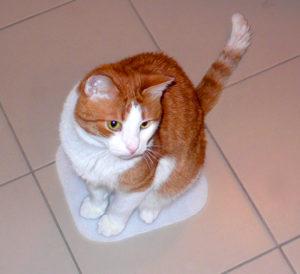 Как научить кошку простым командам (продолжение)