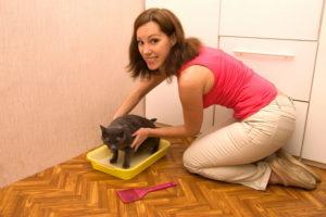 Воспитываем кошку