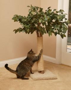 В доме появилось новое животное – вопросы адаптации. Кто в доме хозяин?