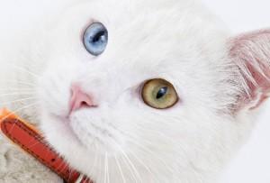 Если у вас глухой кот