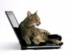 Как отучить кошку ходить по клавиатуре