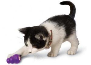 Как подобрать для котика безопасные игрушки