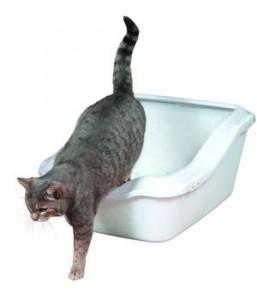 Как приучать кота к туалету
