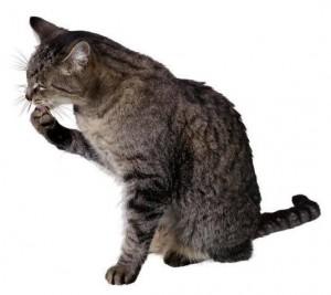 Несколько полезных советов для владельцев кошек