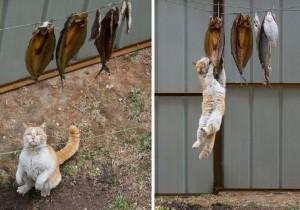 Не кормите кошку сырой рыбой!
