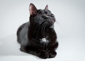 Судьба одного бесстрашного кота
