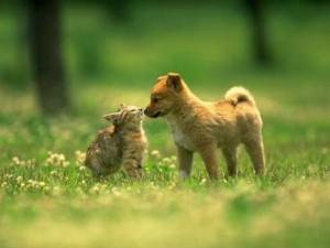 Топ-10 самых распространённых заблуждений о кошках