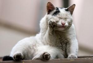 Учим кота умываться