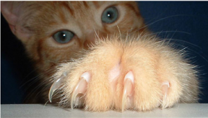 Чтобы кот не драл обои...