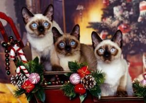 Кошка тоже ждет подарка на Новый год