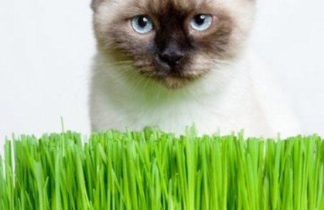 Почему кошка не ест землеройку - 0