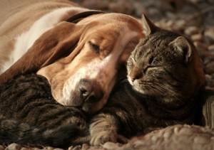 Весенние проблемы у домашних животных