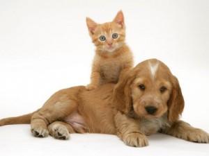 Впервые к ветеринару!