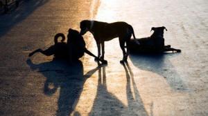 Круглый стол «Жестокое обращение с животными»