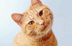 Кошка – лучший психолог