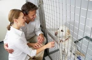 О чем нужно знать, если вы взяли бездомное животное