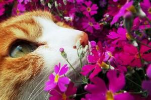 Поздравьте своих мурлык с международным днем кошки!