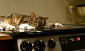 Бытовые опасности для кошки