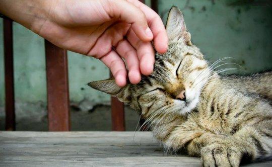 Какие поглаживания кошке наиболее приятны