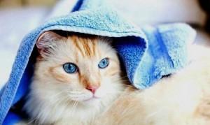 Как правильно вымыть кошку