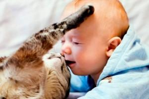 Младенец и кошка существует ли угроза