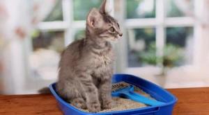 Почему кошка «ходит» мимо лотка