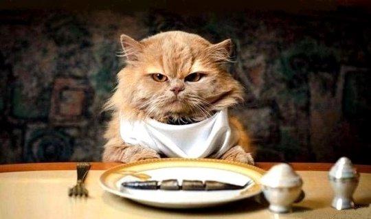 Распространенные заблуждения об уходе за кошкой