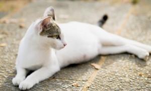 Роды у кошки чем ей помочь