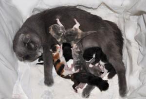 Роды у кошек: как подготовиться правильно