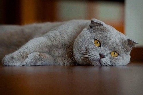 Кошка – источник энергии