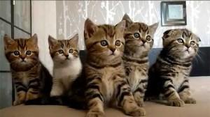Имена котов