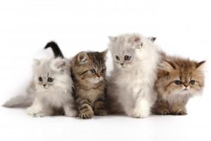 Имена кошек