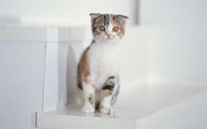 Как держать кошку в чистоте?