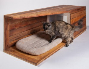 Как приучить кошку к новому дому.