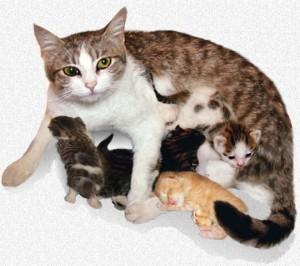 Кошачьи роды.