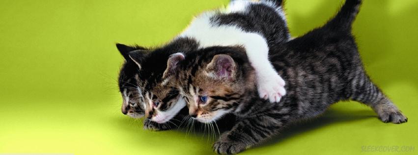 Кошка — друг человека