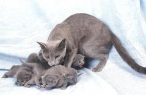 Кошки в Средневековой Европе