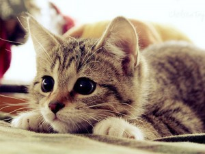 Лечебные свойства кошек.
