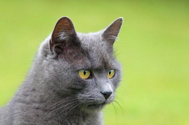 Магическое животное — кошка