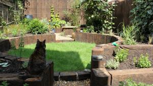 Садовые опасности для вашей кошки