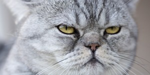 Содержание дома кошки